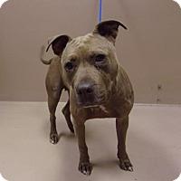 Adopt A Pet :: Myskis - Reno, NV