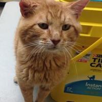 Adopt A Pet :: Herbie - Larned, KS