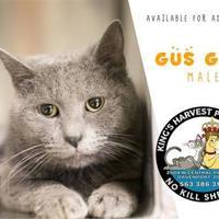 Adopt A Pet :: Gus Gus - Davenport, IA
