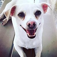 Adopt A Pet :: Tinkerbell - Culver City, CA