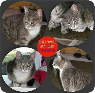 Domestic Mediumhair Cat for adoption in Spanish Fort, Alabama - Momma Cat