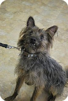 Terrier (Unknown Type, Medium) Mix Dog for adoption in East Hanover, New Jersey - Linus