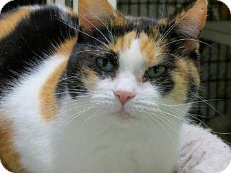 Calico Cat for adoption in Redding, California - Gizelle