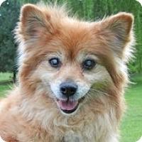 Adopt A Pet :: Elara - Madison, WI