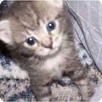 Adopt A Pet :: Tim - Secaucus, NJ