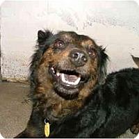 Adopt A Pet :: Smiley - Winter Haven, FL