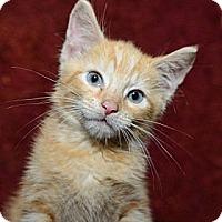 Adopt A Pet :: George - New York, NY