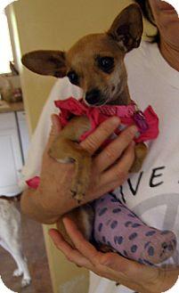 Chihuahua Mix Dog for adoption in El Cajon, California - Ginny