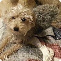 Adopt A Pet :: Buster - Hamilton, ON