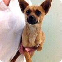 Adopt A Pet :: George - Shawnee Mission, KS