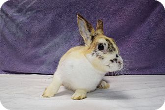 Other/Unknown Mix for adoption in Fountain Valley, California - Willow