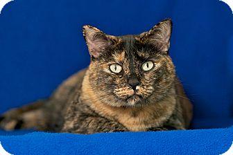 Domestic Mediumhair Cat for adoption in Coronado, California - Zoey