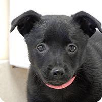 Adopt A Pet :: Jan - Long Beach, NY