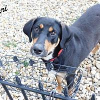 Adopt A Pet :: Mari - Mooresville, IN