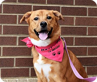 Labrador Retriever Mix Dog for adoption in Charlotte, North Carolina - Willow