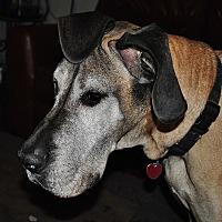 Adopt A Pet :: Kenner - Stevens Point, WI