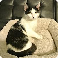 Adopt A Pet :: Oreo - Des Moines, IA