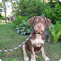 Adopt A Pet :: TaNNer - LAKEVILLE, MA