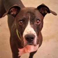 Adopt A Pet :: Bruce Lee - Gainesville, FL