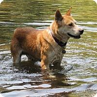 Adopt A Pet :: Luke - Paso Robles, CA