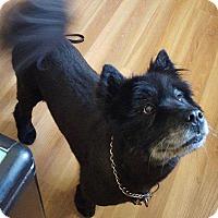 Adopt A Pet :: Asia - West Branch, MI