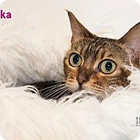 Adopt A Pet :: Annika - San Juan Capistrano, CA