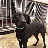Adopt A Pet :: DIESEL - Upper Sandusky, OH