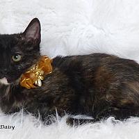 Adopt A Pet :: Daisy - Kerrville, TX