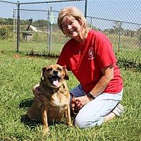 Adopt A Pet :: Max - Elyria, OH