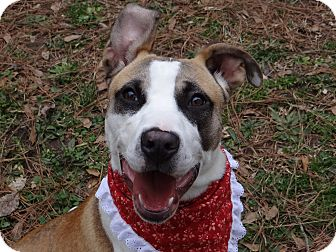 Cattle Dog/Pit Bull Terrier Mix Puppy for adoption in Peachtree City, Georgia - Kaya