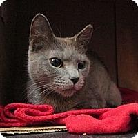Adopt A Pet :: Demona - Brooklyn, NY