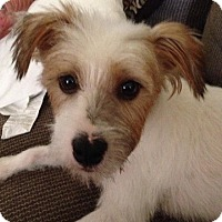 Adopt A Pet :: CONNER - Mission Viejo, CA