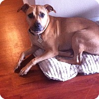 Adopt A Pet :: Madi - Hollywood, FL