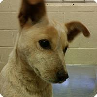 Adopt A Pet :: Rachel - Wilmington, DE