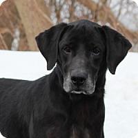 Adopt A Pet :: Zorro - Port Washington, NY