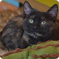 Adopt A Pet :: Sakura - Brooklyn, NY