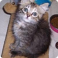 Adopt A Pet :: Brandy - Richmond, VA