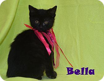 Domestic Shorthair Kitten for adoption in Bucyrus, Ohio - Bella