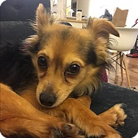 Adopt A Pet :: Panama-Jack - VIDEO! - Los Angeles, CA