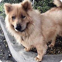 Adopt A Pet :: Kitko - Ventura, CA