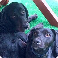 Adopt A Pet :: MARSHMALLOW & SPARKY - Pine Grove, PA
