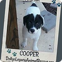 Adopt A Pet :: COOPER - Lincoln, NE