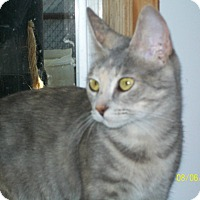 Adopt A Pet :: Beatrice - Mexia, TX