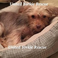 Adopt A Pet :: Penny Ann - Ocala, FL