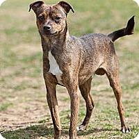 Adopt A Pet :: Taco - Rockaway, NJ