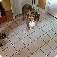 Adopt A Pet :: Mona - Conway, AR