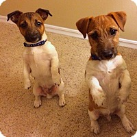 Adopt A Pet :: Torque and Twister - Houston, TX