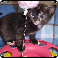 Adopt A Pet :: Sprinkles - South Plainfield, NJ