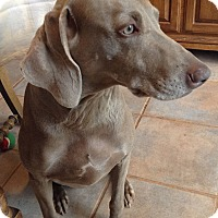 Adopt A Pet :: Heidi (w/sister Greta) - Grand Haven, MI