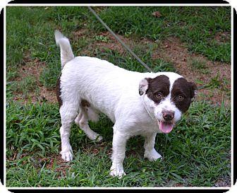 Terrier (Unknown Type, Medium) Mix Dog for adoption in Atlanta, Georgia - Levy